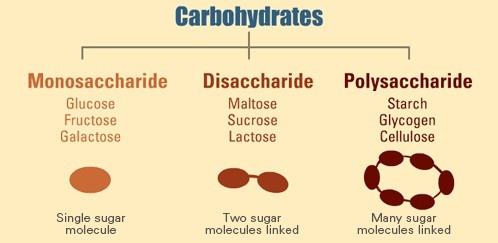 Ogļhidrātu iedalījums