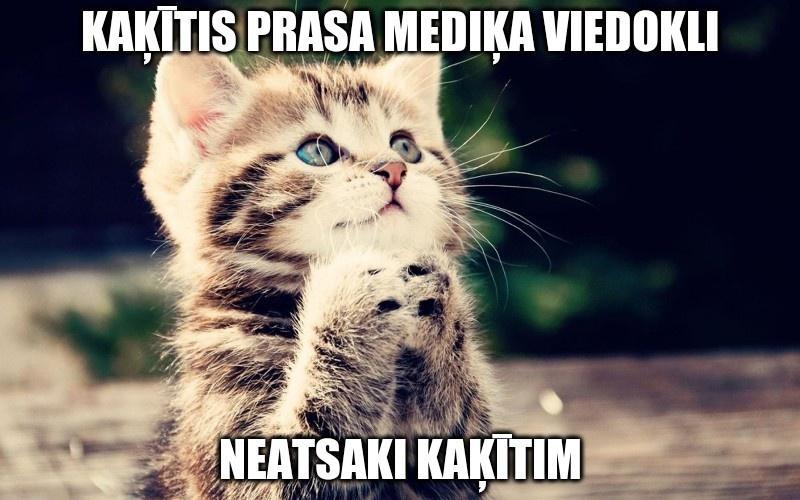 Kaķītis grib mediķa viedokli. Neatsaki kaķītim.