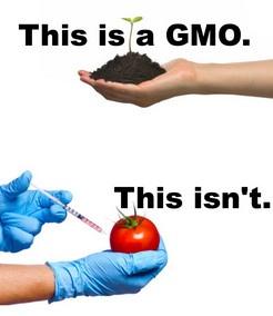 Tā izskatās ģenētiski modificēts organisms.